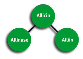 AlliTech - Allicin - Allinase - Alliin